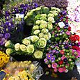 Plus de fleurs